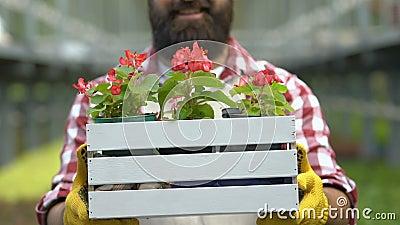 Giardinaggio maschile con vaso di fiori, coltivatore, coltivatore video d archivio