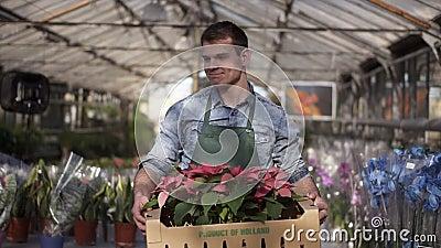 Giardiniere maschile, alto e maneggevole, in camicia e grembiule, con scatola di cartone e piante di fiori rosa, che camminano tr archivi video