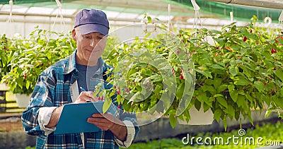 Giardiniere Writing In Clipboard mentre sorvegliando le piante in serra video d archivio