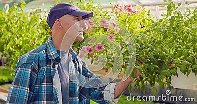 Giardiniere Writing In Clipboard mentre sorvegliando le piante in serra archivi video