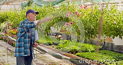 Giardiniere Writing In Clipboard mentre sorvegliando le piante in serra stock footage
