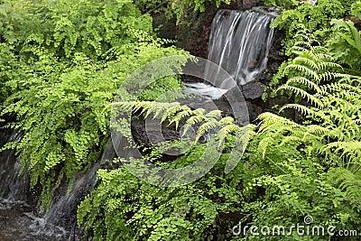 Giardino dell 39 interno con progettazione della cascata for Cascata da interno