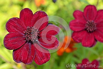 Giardino floreale rosso