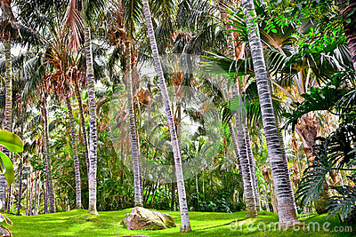 Giardino tropicale della palma nel bello paradiso