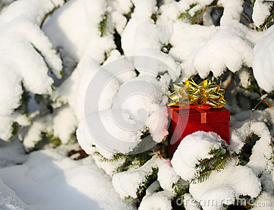 Gift Box under Christmas tree covered with Snow. Outdoor. Winter