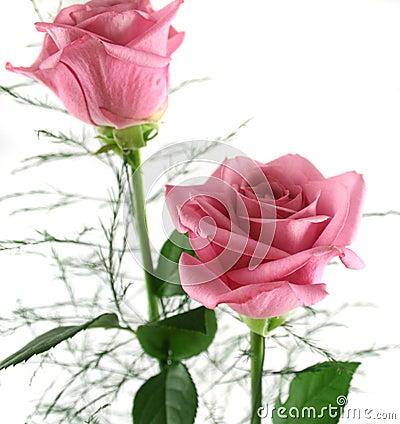 Gift Roses 2