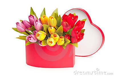 Giftbox and tulips isolated
