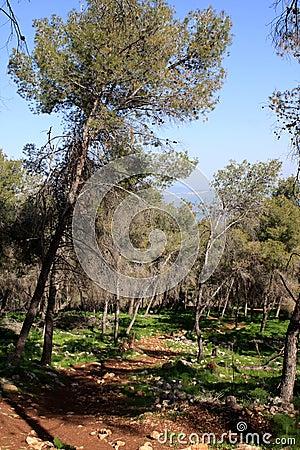 Gilboa forest, Israel