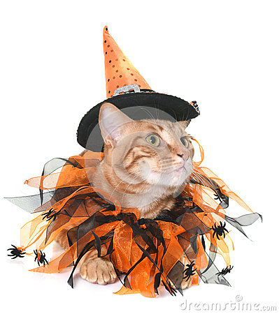 Free Ginger Cat And Halloween Stock Images - 94413944