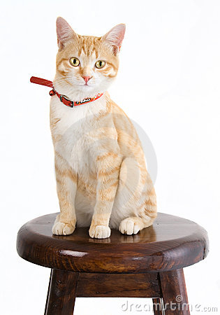 Ginger cat on chair