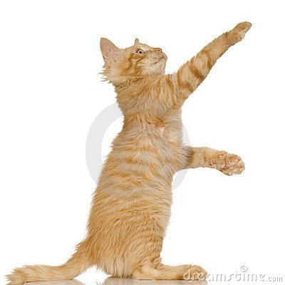 Free Ginger Cat Kitten Royalty Free Stock Image - 2626686