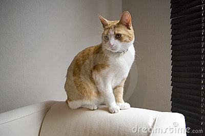 Ginger cat on sofa