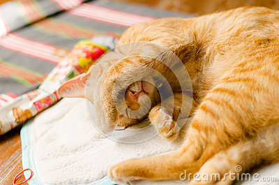 Ginger cat want to sleep