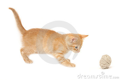 Ginger kitten palying with ball isolated on white