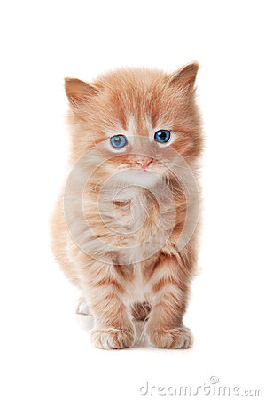 Ginger kitty with blue eyes