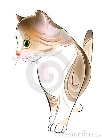 ginger tabby kitten.