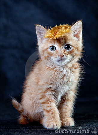 Ginger tiger-kitten with a feather