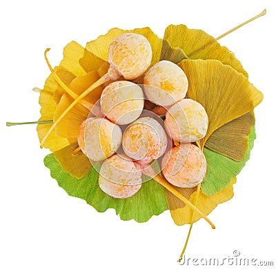 Ginkgo Biloba fruits heap over its leaves