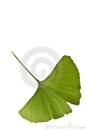 Free Ginkgo Biloba Leaf Royalty Free Stock Photography - 2985977