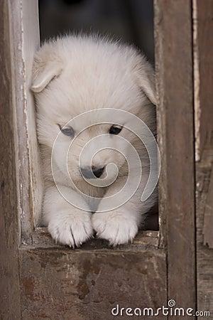 Gioco del cucciolo