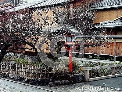 Gion lantern in spring