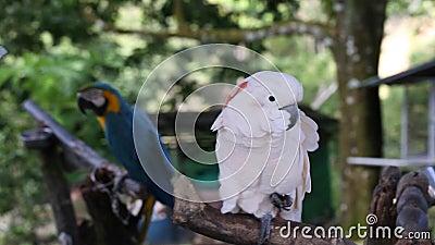 Giorno di estate soleggiato sull'isola tropicale Uccello esotico archivi video
