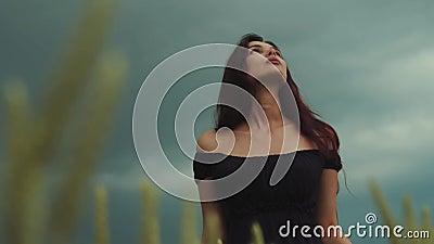 Giovane donna castana splendida in un vestito nudo nero dalla spalla che cammina attraverso il campo di grano dorato e di contatt stock footage