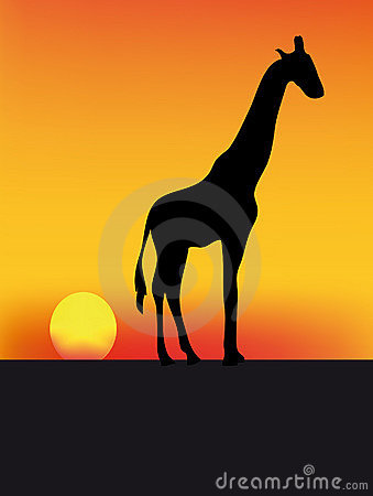 Girafe and sunset
