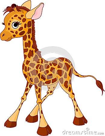 Free Giraffe Calf Stock Photos - 20310013