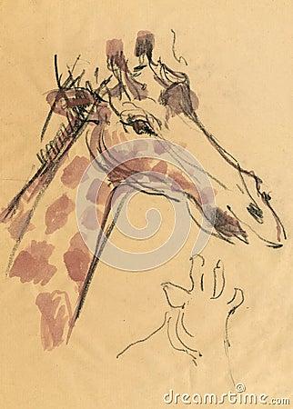Giraffe, drawing 2
