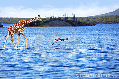 Giraffe and flamingo