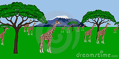 Giraffe herd in african scenery