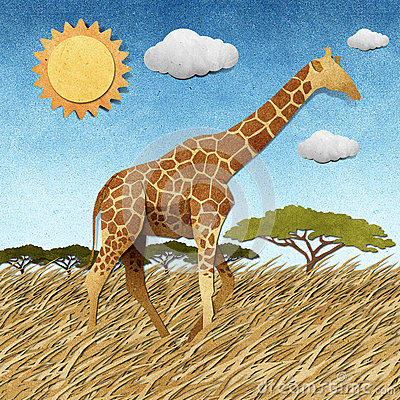 Free Giraffe  In Safari Field Recycled Paper Background Royalty Free Stock Photos - 26143318