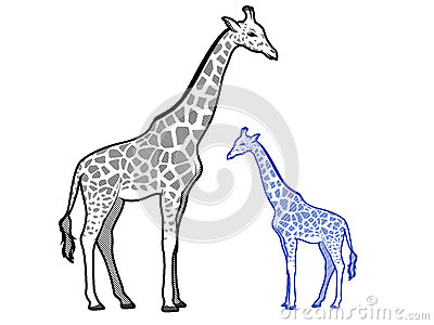 giraffe outlines royalty free stock photography image
