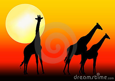 Giraffe silhouette in sunset