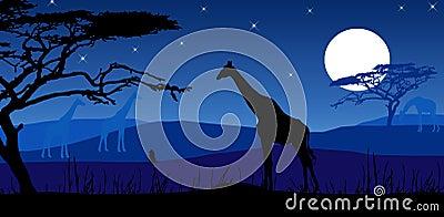Giraffes in moonlight