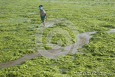 girl in Algae Editorial Photography