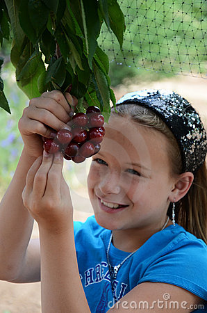 Free Girl Eating Cherries Off Of The Tree Royalty Free Stock Photography - 20129597