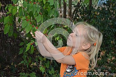 Girl examines berries