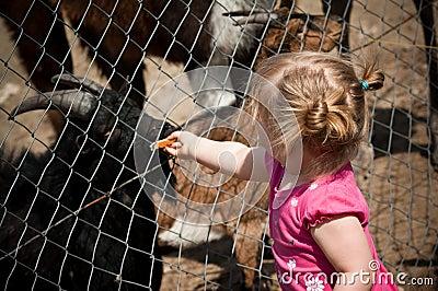 Girl feeding zoo animals