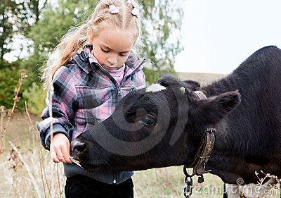 A girl feeds the cow