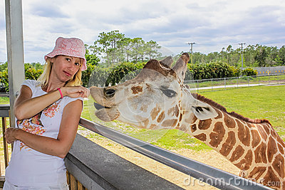 Girl feeds a giraffe