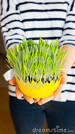 Free Girl Giving Green Oat Sprouts For Easter Stock Photography - 90326942