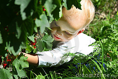 Girl picking berries
