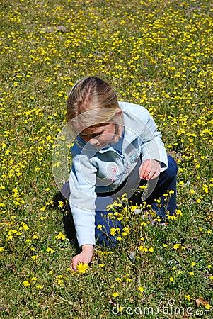 Free Girl Picking Flowers Royalty Free Stock Image - 9099206