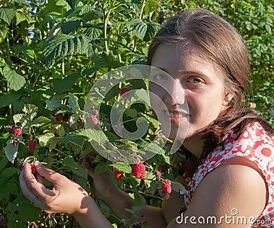 Girl picking raspberry in the field