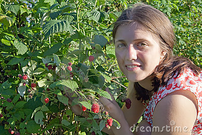 Girl picking raspberry in the field