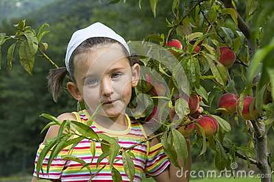 Girl picks peaches