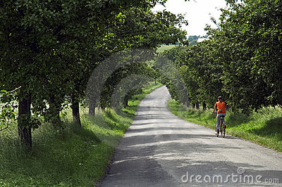 Girl riding bicycle on road through trees