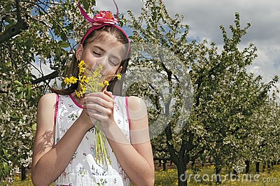 Girl in the sour cherry orchard smelling flowers